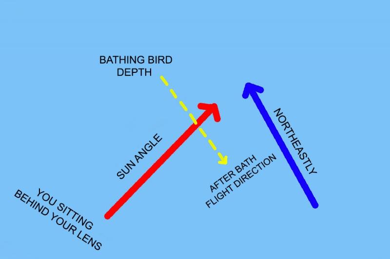 NE-Wind-in-morning-bathing-birds-2