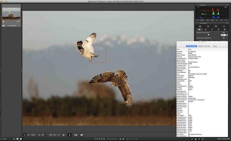 SEO-DPP4-Screen-Shot-