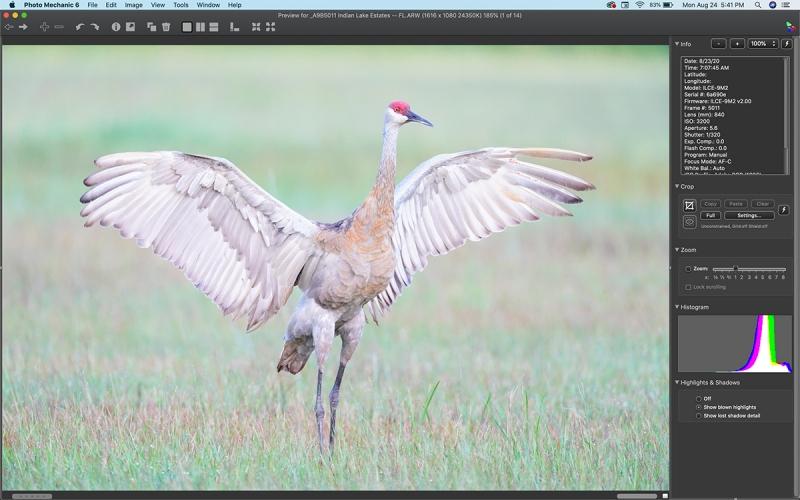 Sandhill-Crane-too-tight-scrn-capt