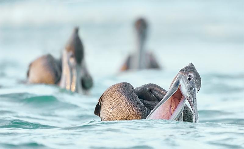 anita-pelican-victory-at-sea-_A922122-Ft-de-Soto-Oct-2020-2