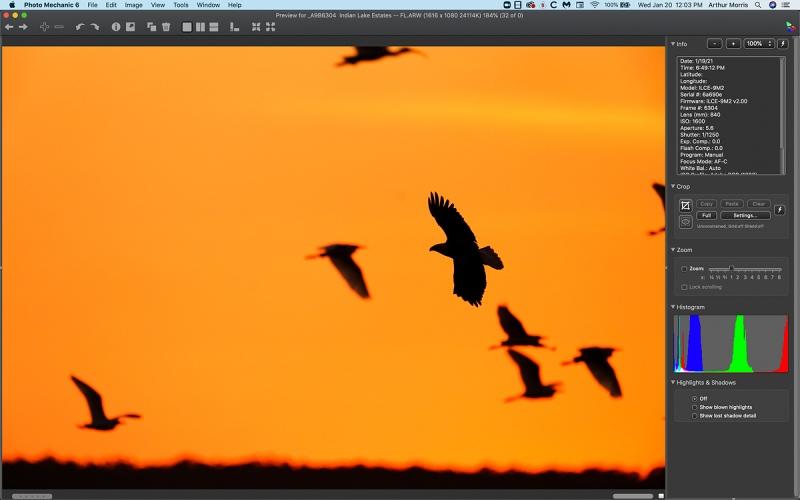 bald-eagle-Photo-Illustr-ORIGN-1