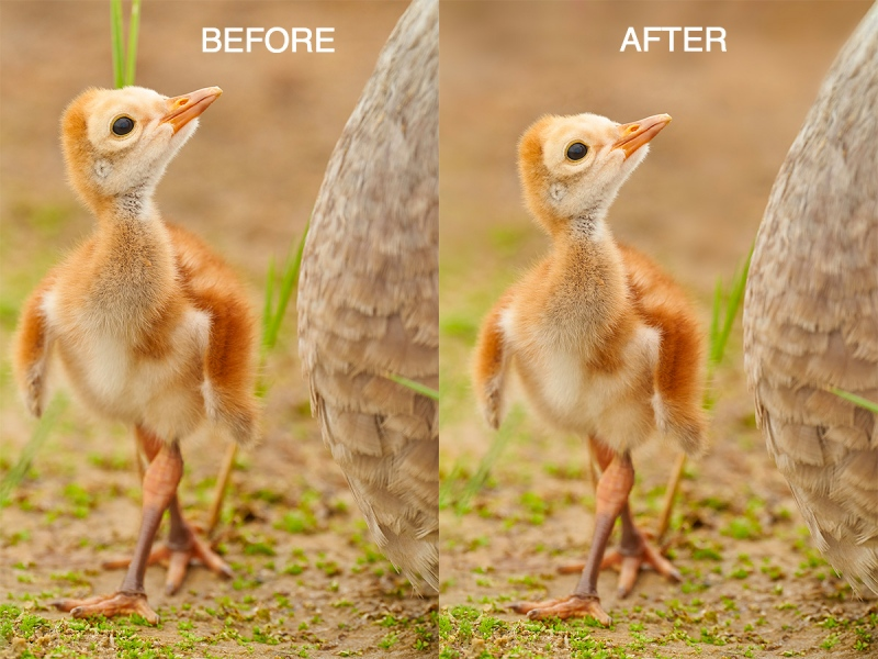 before-after-crane-chick-1