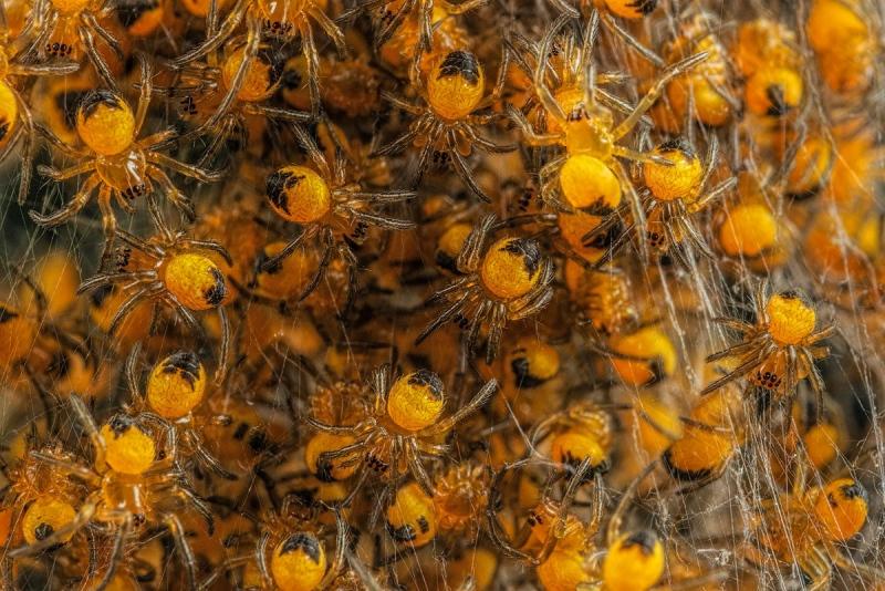 blog-Garden-Spiders_4088