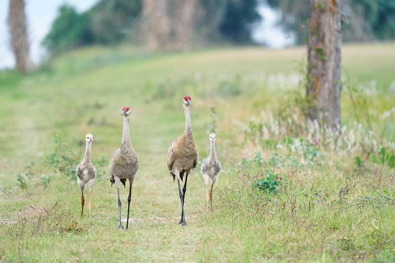 crane-colt-family-of-four-A_A921658-Indian-Lake-Estates-FL-1