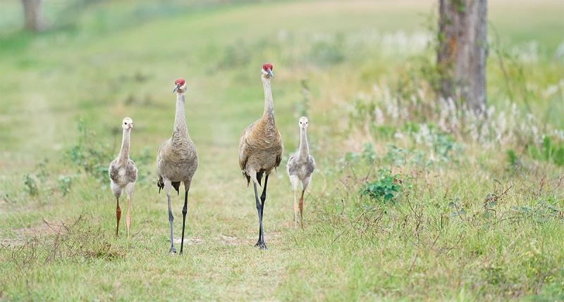 crane-colt-family-of-four-PANO-_A921658-Indian-Lake-Estates-FL-1