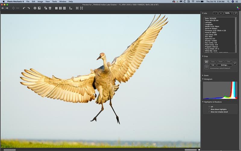 crane-colt-jumping-Ph-Mechanic-1