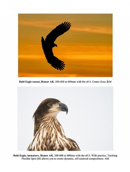 eagle-page