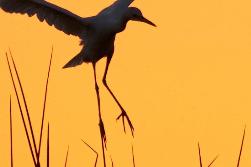 feet-and-reeds-_A920749-Indian-Lake-Estates-FL-1