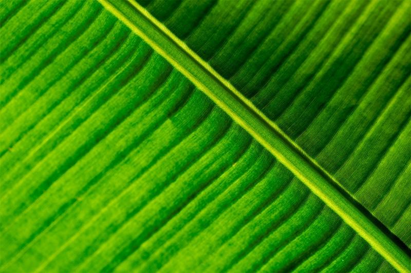 fern-backlit-_A926093-Gatorland-FL-1