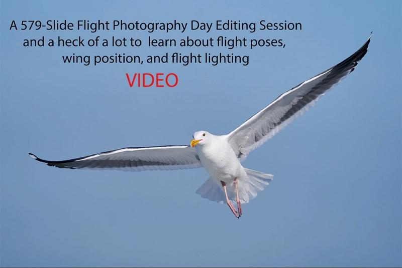 flight-editing-video-coverA