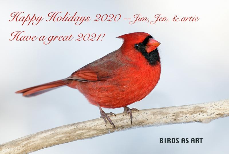 hapy-holidays-2020-Northern-Cardinal-white-version-9M4O1493-Morton-NWR-Noyac-NY