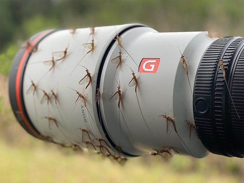 mayflies-on-600-lens-IMG_0052-2