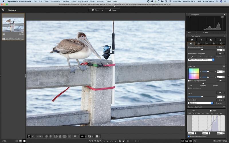 pelican-and-fishing-rod-DPP4-1