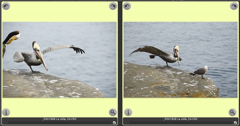 pelican-two-frame-edit