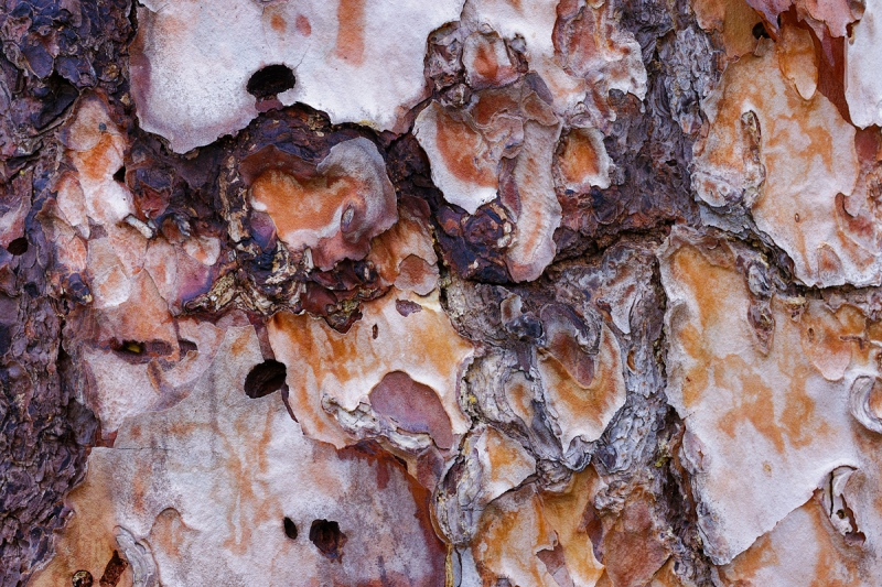 pine-bark-art-vivid-HDR-_Q5A3743-Indian-Lake-Estates-FL