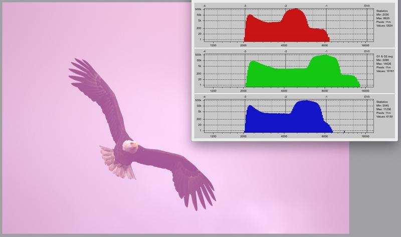 rawdigger-bald-eagle-adapted-histogram-1