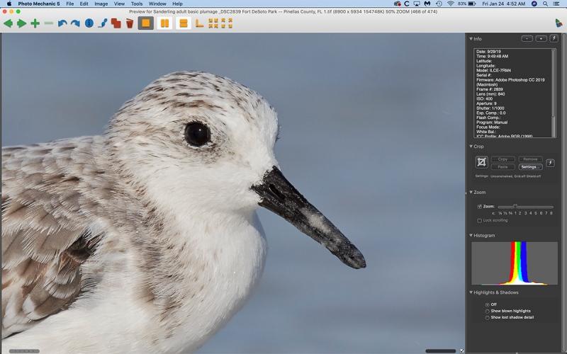 sanderling-eye-skin100-pct