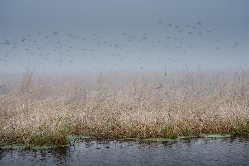 wide-_A7R6285-Shovler-Pond-Oct-2020