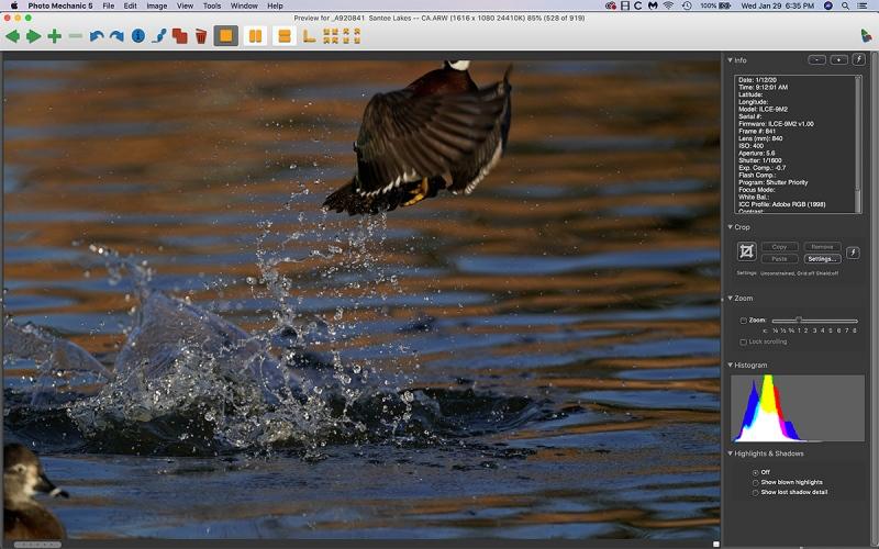 wood-duck-splash