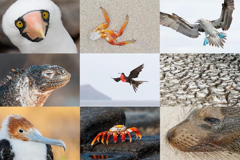 Galapagos-Card-A2015