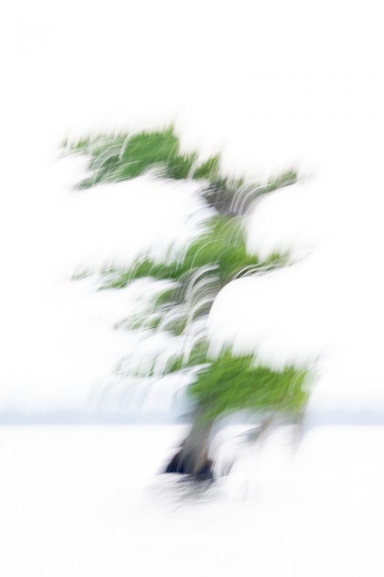 Cypress-Tree-blur-_A1A7513-Lake-Blue-Cypress-FL-copy