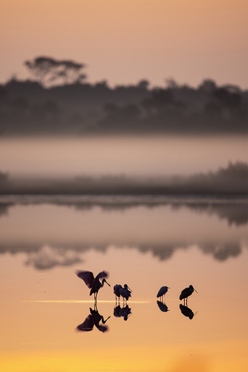 Donna-spoonbill-sunrise-A-_93A1465-1200rs