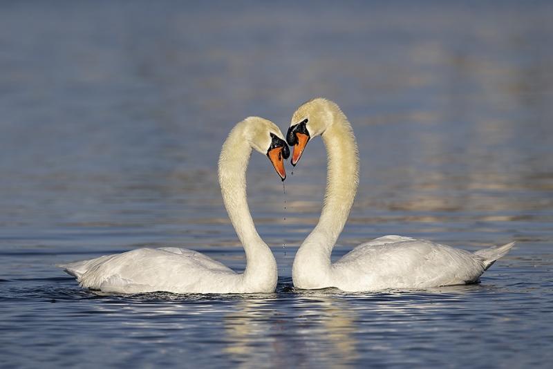 Donna-swans-_93A4568v2-1200rs