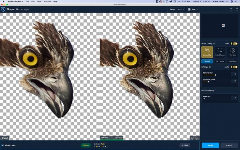 Osprey-face-Sharpen-AI-1