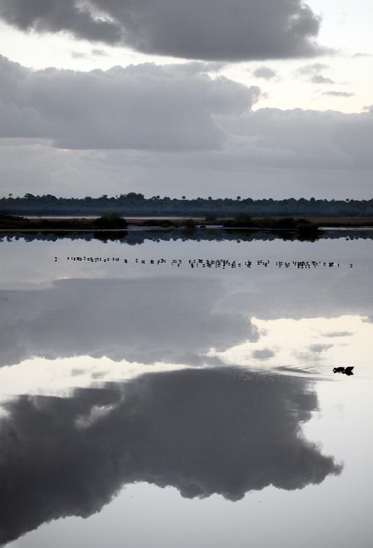 Pewter-bird-scape-BLUE-OUT-_91A0012-Merritt-Island-NWR-FL