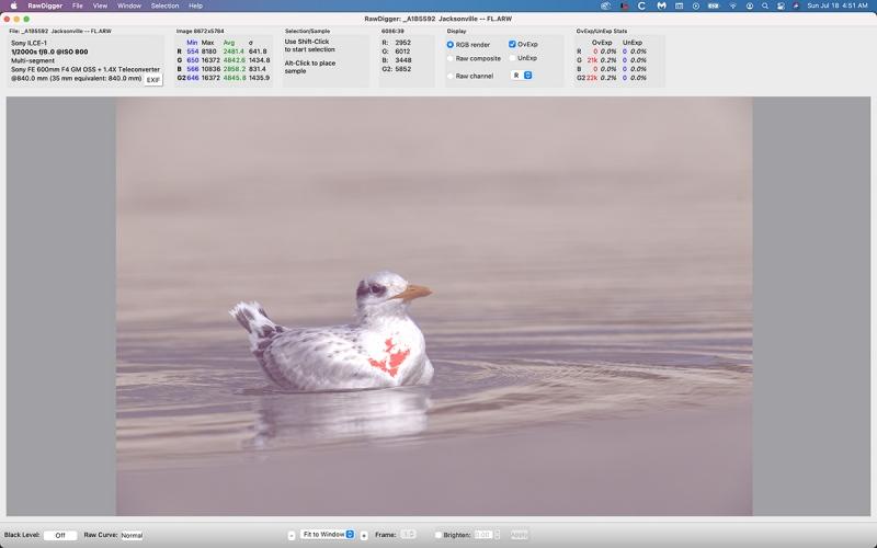 ROTE-swimming-chick-OV-EXP