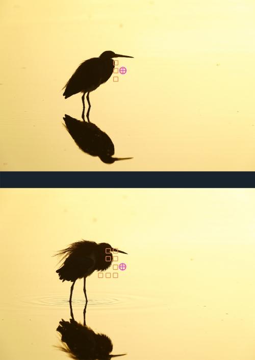 Tric-Heron-AF-points-combo-1