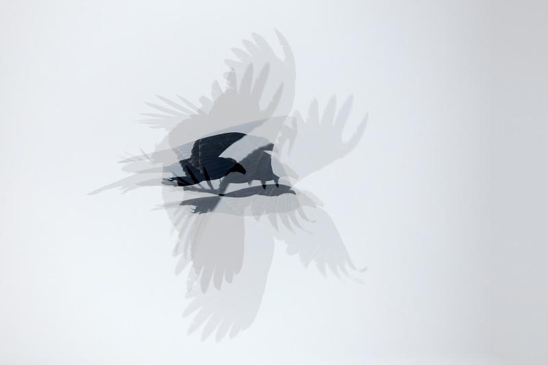 Turkey-Vulture-in-camera-ME-_91A7726-Indian-Lake-Estates-FL
