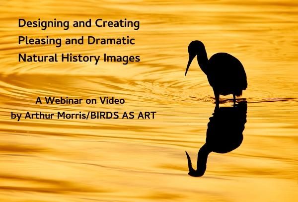 Webinar-on-Video-1