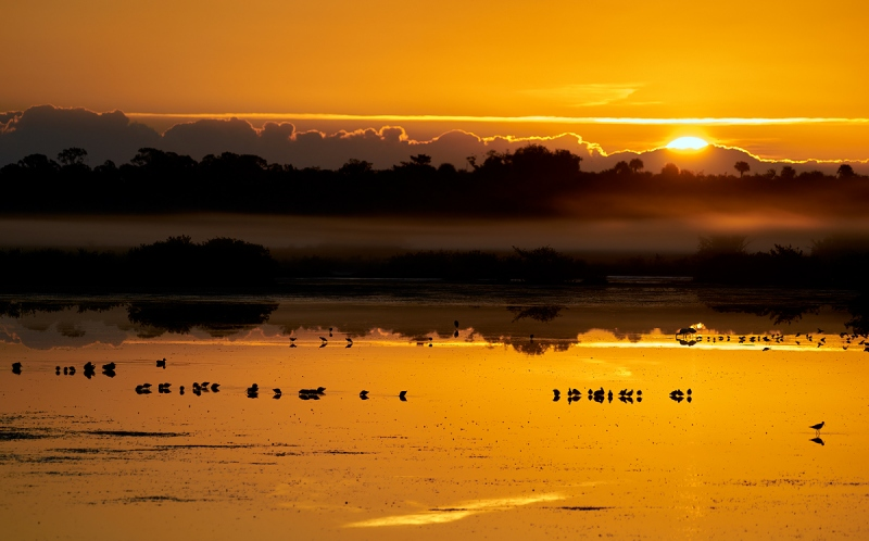 sunrise-and-birds-_A928347-Merritt-Island-NWR-FL