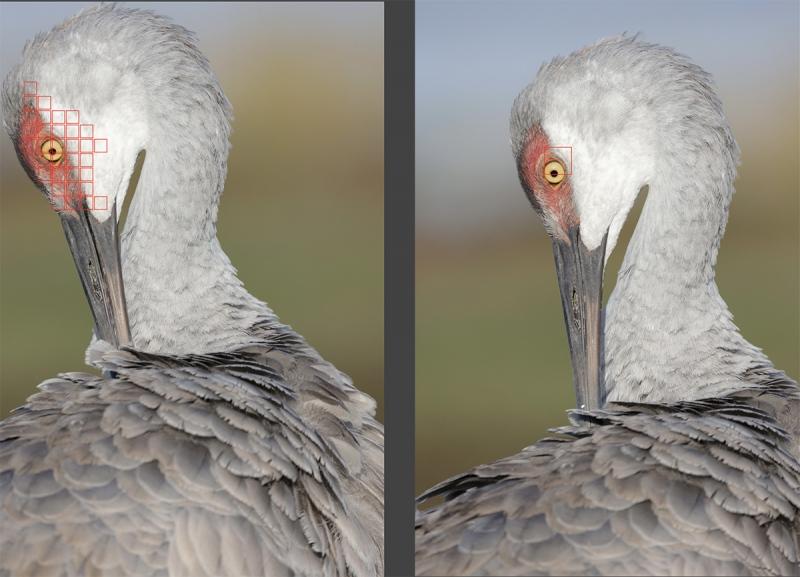 vert-preening-crane-AF-points-