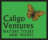 caligologo12-300-wide