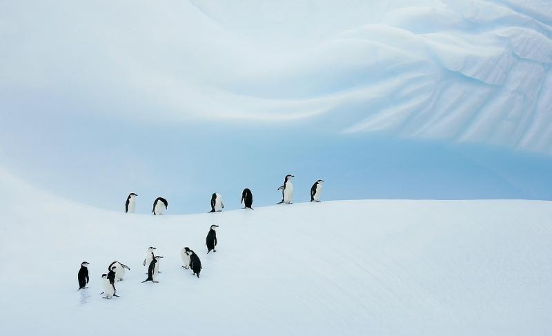 chinstrap-penguin-group-on-blue-iceberg-_b2e8650-coronation-island-south-orkney-islands_1