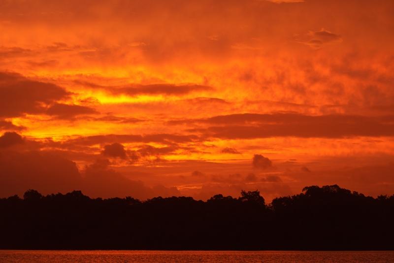eastern-sky-at-sunrise-_w3c7837-caroni-swamp-trinidad