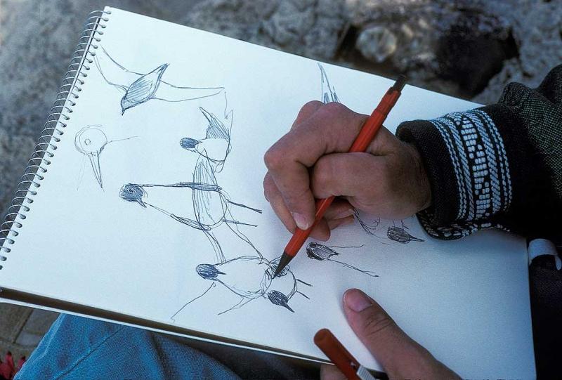 julie-zickefoose-sketching