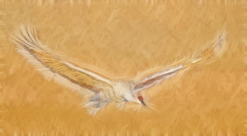 sandhill-crane-flight-fract-_y9c0649-bosque-del-apache-nwr-san-antonio-nm