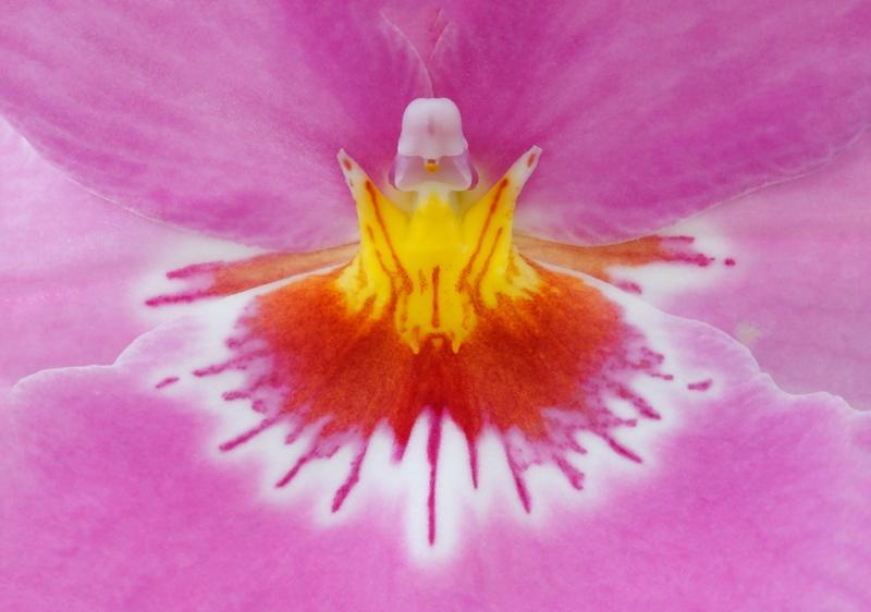 orchid-center-_a1c9567-keukenhof-gardens-lisse-holland