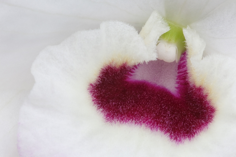 orchid-dehoog-_a1c1147-keukenhof-gardens-lisse-holland