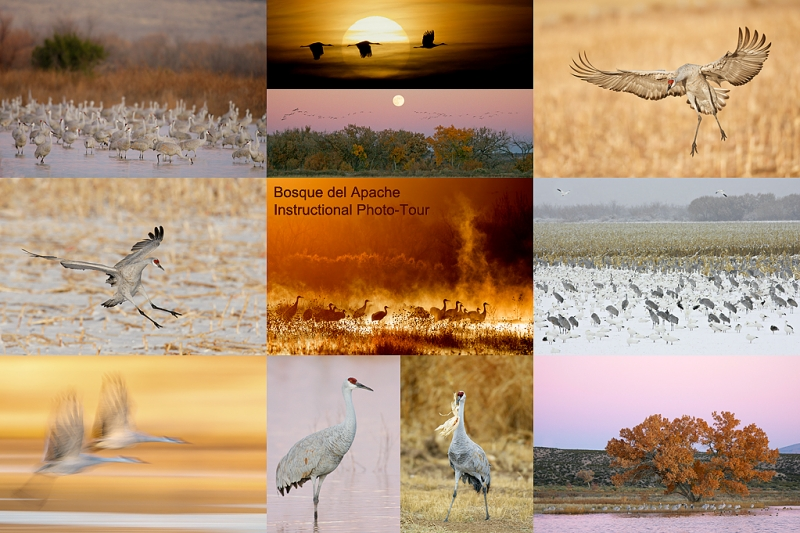 bosque-ipt-cranes