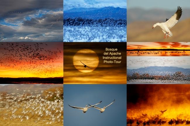 bosque-ipt-snow-geese_0