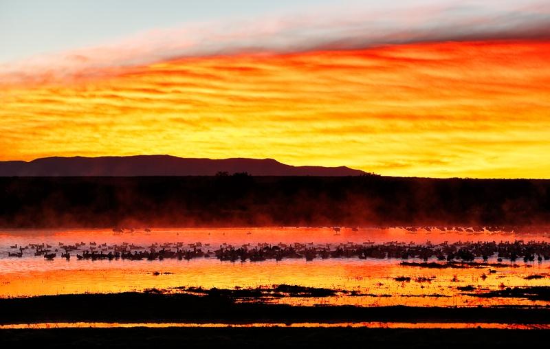 snow-geese-at-sunrise-_09u0049-bosque-del-apache-nwr-san-antonio-nm