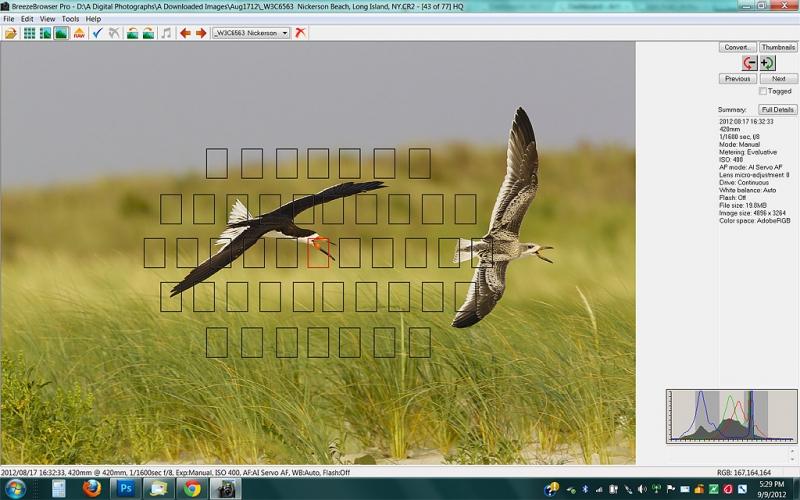 screen-capture-black-skimmer-chase