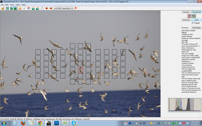 tern-flock-screen-capt