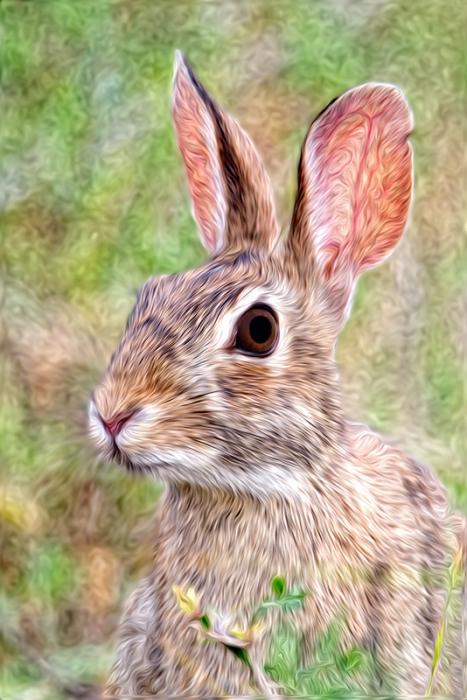 rabbitpixelbender